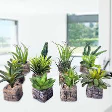 indoor plants singapore singapore teacher s day flower flowers for teacher