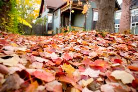 why hire a lawn care company for leaf removal angie u0027s list