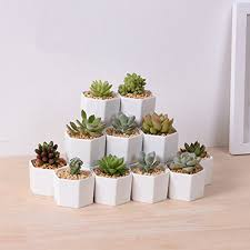 Seeking Cactus Cast Hexagon White Ceramic Succulent Pot Planter Flower Pot