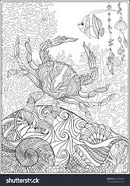 coral fish and sea shells coloring page for adults shutterstock