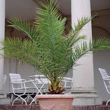 cheap exotic plants for sale online buy exotic plants van meuwen