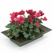 Indoor Flower Plants Fresh Indoor Flowering Plants Uk 21122