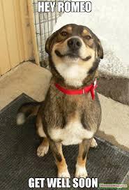 Meme Get Well Soon - hey romeo get well soon meme good dog greg 59328 memeshappen