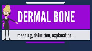 what is dermal bone what does dermal bone dermal bone