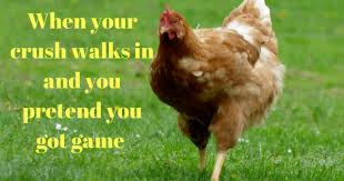 Chicken Memes - 11 chicken memes that prove we can totally relate to chickens