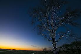 poet in hanlontown brightens iowa with lighted tree