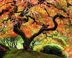 50 most beautiful tree photos creativefan