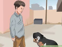how to approach a stray dog 11 steps with pictures wikihow