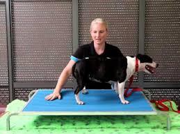 virtually indestructible dog bed youtube