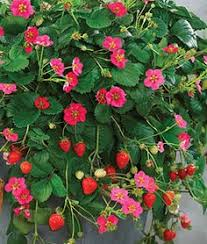 edible ornamental plants for your garden ornamental plants