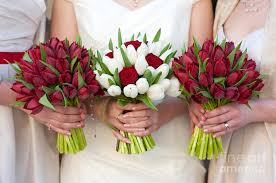 wedding flowers tulips and white tulip and wedding bouquets photograph by avison