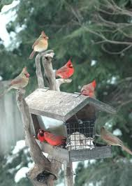 with natural feed and feeders birds in the yard