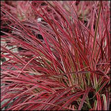 free ornamental grass seed gardening seeds bulbs listia