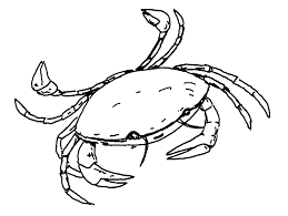 aquatic coloring pages