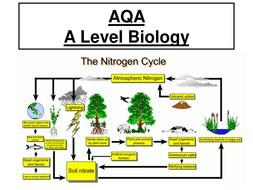 aqa a level biology nitrogen cycle ppt worksheet practical