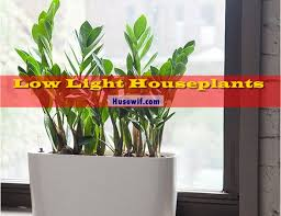 15 best low light houseplants to grow indoor