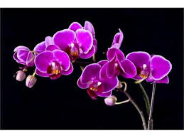 Orchid Flower Pic - single purple orchid flowers orchid flower set of image