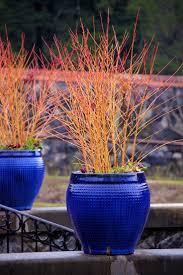 129 best winter gardens images on pinterest winter garden