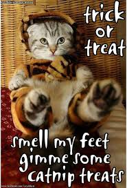 Halloween Cat Meme - 144 best halloween cats dogs images on pinterest healthy