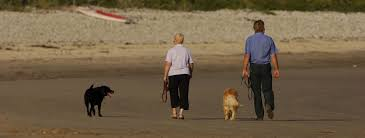 anglesey pet friendly holiday cottages north wales menai
