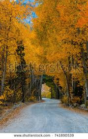 sierra nevada fall colors stock images royalty free images