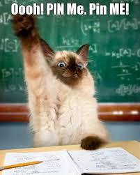 Frown Cat Meme - 30 laughable grumpy cat meme collection golfian com