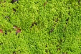 moss and what is peat moss tips for using peat moss in gardens