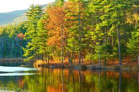 ways fall foliage hampshire