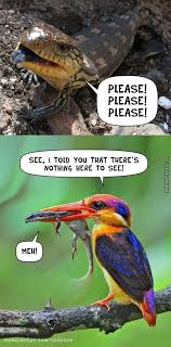 Reptile Memes - lizard memes best collection of funny lizard pictures