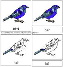 printable montessori curriculum bird nomenclature cards printable montessori nomenclature