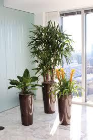Online Interior Design Portfolio by Interior Plants Plant Peddler