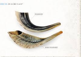 shofar store bar sheshet rebak half polished shofar the judaica store