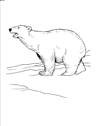 polar bear coloring pages to print virtren com