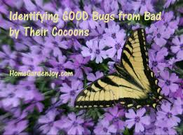 top cocoon identification with butterfly photo w text on home