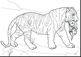coloring page tiger paw tiger coloring pages with coloring pages tiger and glum me inside