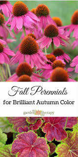 106 best perennials images on pinterest flower gardening