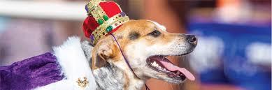 mardi gras dog beggin pet parade soulard mardi gras 2018 st louis mo
