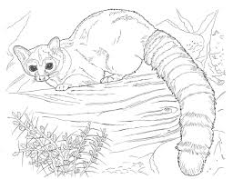 complicated animal coloring pages kids coloring