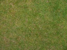 home texture grass texture qygjxz
