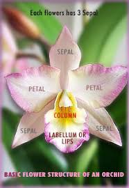 What Is An Orchid Flower - orchid care tips