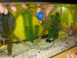 how to clean a fish tank hirerush