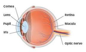 Picture Of Eye Anatomy What Is Astigmatism American Academy Of Ophthalmology