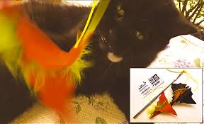 cat halloween picture stark raving cat u2014 catnip joints cat toys cat lover gifts
