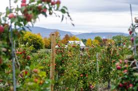 best apple orchards in new england new england today