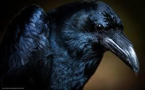corbeau bureau tlcharger fond d ecran oiseau corbeau macro fonds d ecran gratuits