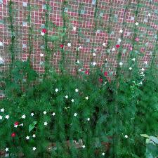 Garden Netting Trellis Nylon Trellis Netting Plant Support Climbing Plants Vine Veggie