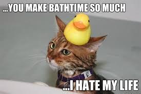 Cat In Bathtub Bathtub Cat Memes Quickmeme