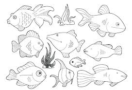 saltwater fish coloring pages marine fish coloring pages marine