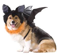 pet costumes pet costume contest anoka