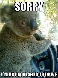 Koala Meme Generator - sorry i m not koalafied to drive driving koala meme generator